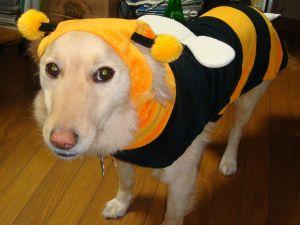 honey bee buntamaru